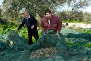 Acropolis Organics Fresh Organic Olives on the net